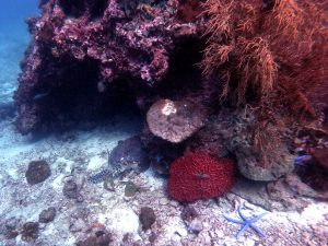 1coral.org